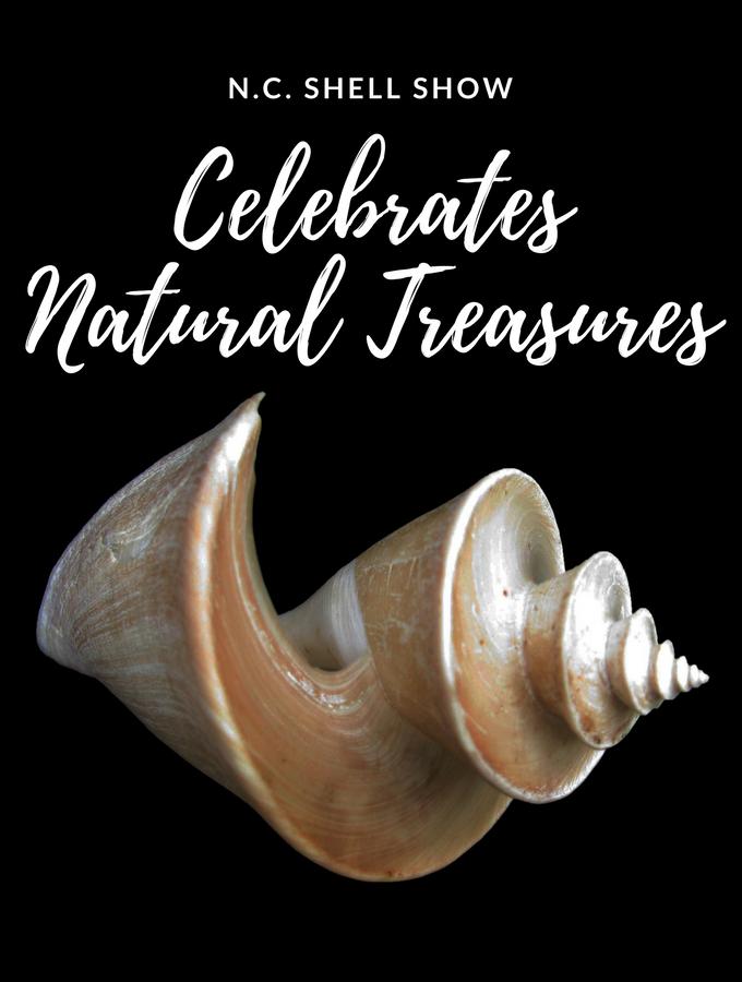 N.C. Shell Show Celebrates Natural Treasures